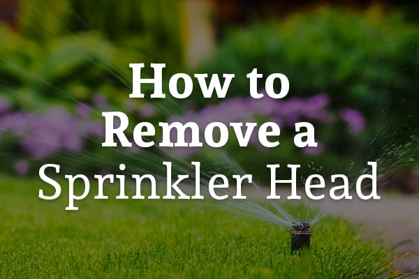 A sprinkler is watering a fresh green lawn with the words, how to remove a sprinkler head.